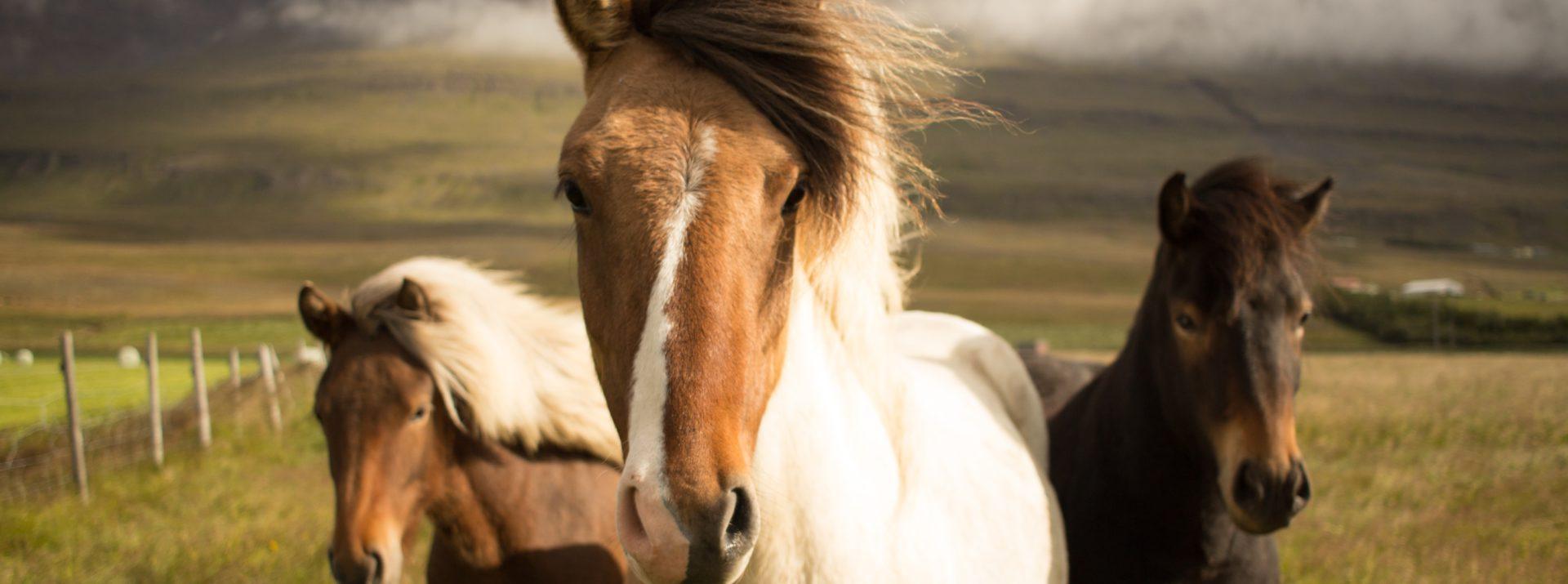 Gun je paard een pijnvrij lichaam