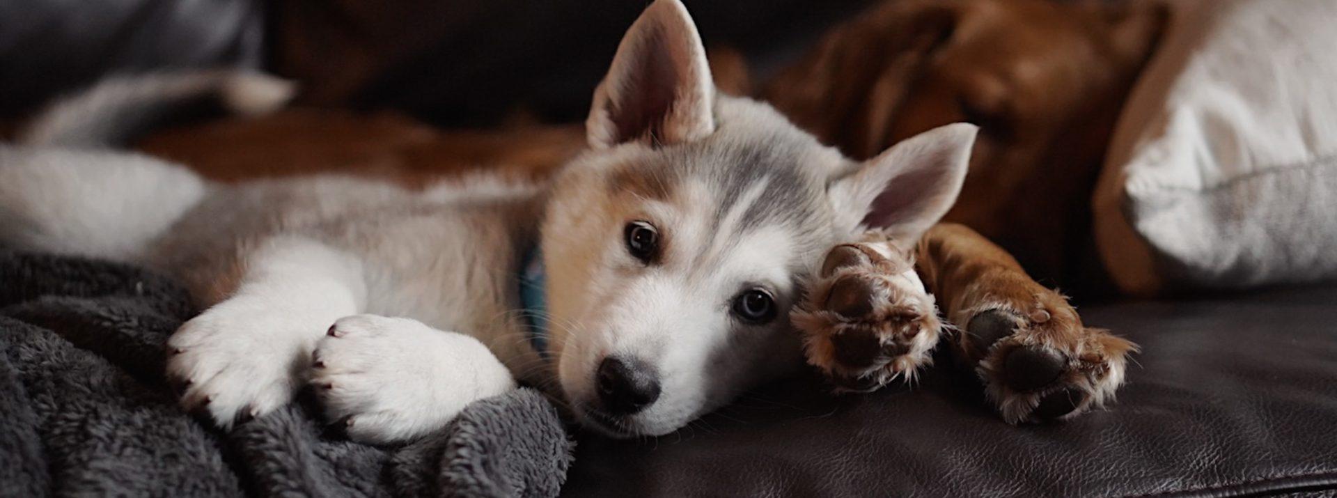 Ondersteun je hond in zijn dagelijkse activiteiten